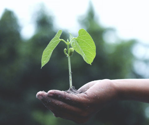Compromiso en calidad y respeto al medio ambiente